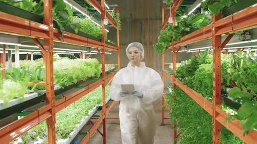Greenhouse Worker Examining Vertical Farm
