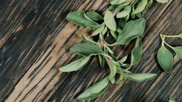 Thumbnail for Fresh Marjoram Leaves