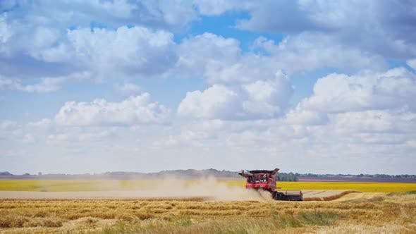 Thumbnail for Grain harvesting tractor. Machine for separating wheat grains working on field