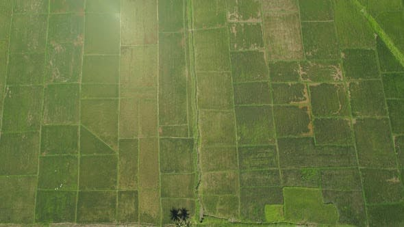 Thumbnail for Landscape with Rice Terrace Field. Philippines, Luzon