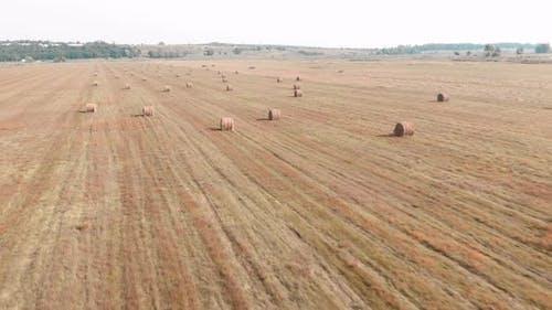 Haystacks. Hay bales. Hay sheaf