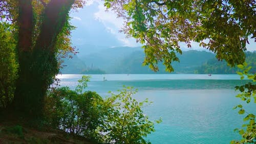 Tree with Green Leaves Against Blue Bled Lake and Mountains