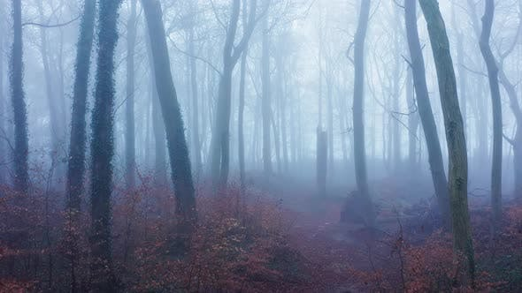 Luftdrohnenvideo der verfluchten Halloween-Waldszene bei nebligen nebligen Wetterbedingungen mit Bäumen