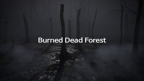 Burned Dead Forest
