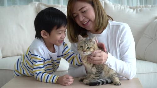 Asiatische Mutter Und Ihr Sohn Spielt Mit Britischer Katze Im Wohnzimmer