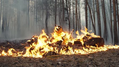 Forest Arson Concept. Burning Heap of Litter in Wood, Causing Wildfire and Deforestation