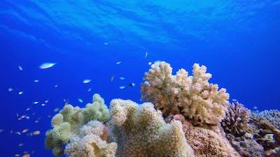 Underwater Colourful Scenery