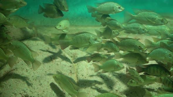 Thumbnail for Schöne Fische Oceanarium.Ddeep Unterwasserwelt