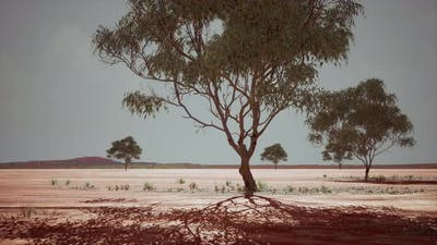 Dry African Savannah with Trees