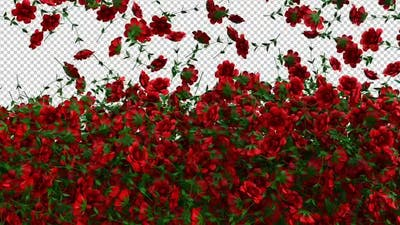 Red Roses Screen Overlay and Transition