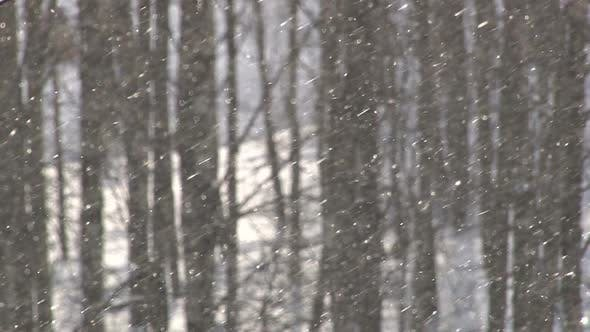 Cover Image for Snowfall In Forest