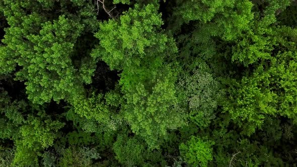Thumbnail for Aerial Top Down View of Forest Trees Background
