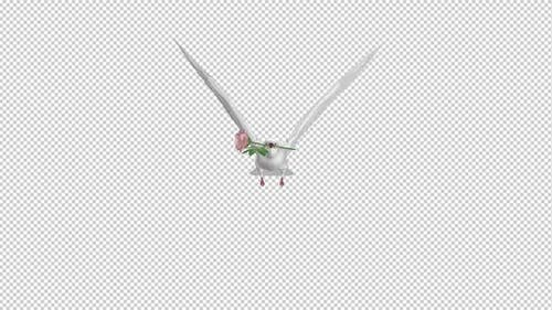 White Dove with Pink Rose - Flying Cycle - Front View - 4K Transparent Loop