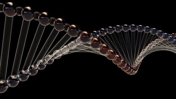 Cover Image for DNA Double Helix
