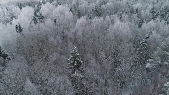 Thumbnail for Winter Landscape with Forest.