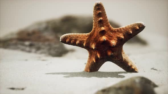 Thumbnail for Red Starfish on Ocean Beach with Golden Sand