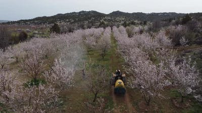Agricultural Spraying Blooming Tree