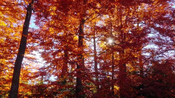 Thumbnail for Walking on Autumn Forest