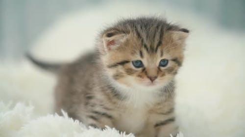 Little Kitty on a Blanket