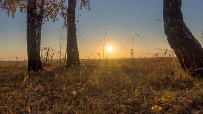 Meadow Timelapse at the Summer or Autumn Time
