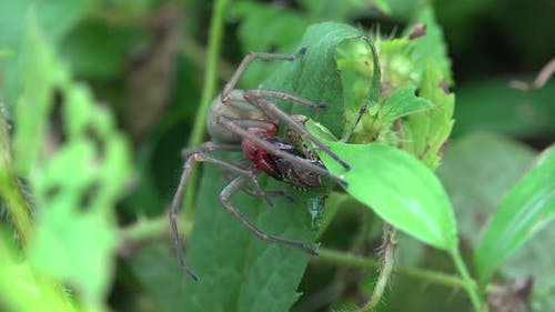 Spider and Hunting