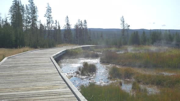 Thumbnail for Swamp at Yellowstone National Park