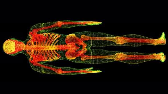 Head Up Display of Advance Human Biomedical Diagnostic Human Body 02