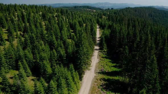 Thumbnail for Aerial Drone View, Top Down Flying Over Forest Road with Car Driving Along Forest Road in Mountain