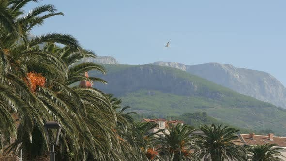 Thumbnail for Palm trees and mountains