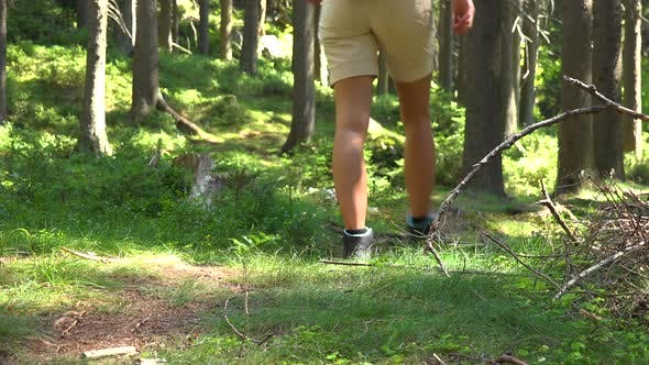Thumbnail for A Woman Walks Down a Trail in a Forest on a Sunny Day - View From the Ground