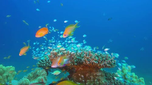Underwater Sea with Tropical Fishes
