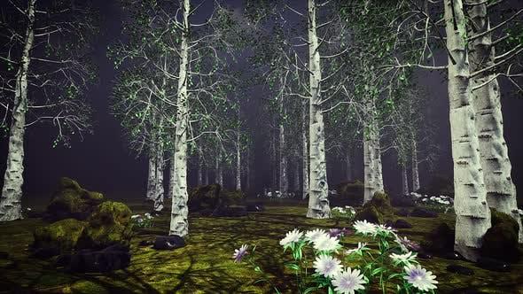 Thumbnail for Aspen Forest