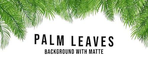 Palm Leaves 4