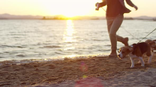 Cover Image for Beagle Dogs Running with Owners along Lakeshore at Sunset