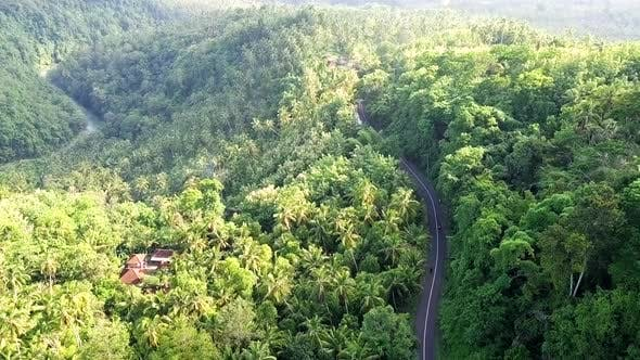 Thumbnail for Sequence of Dense Jungle with One Lane Road in Bali
