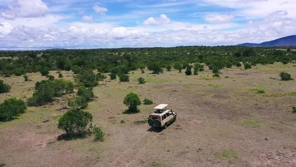 Travelers Safari