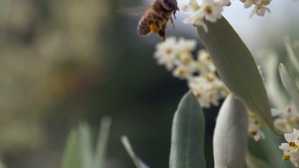Thumbnail for Bee Flower Fly Dof Slow Motion