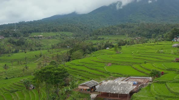 Rice Field Plantations with Water on Hill Terraces in Bali