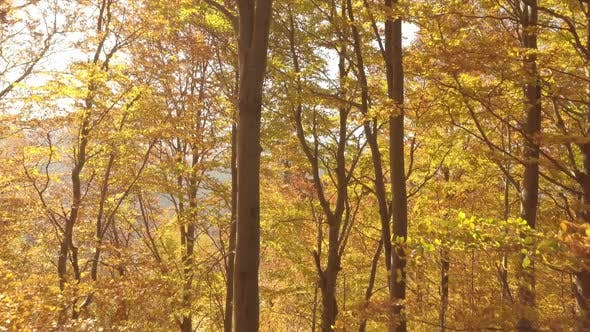 Thumbnail for Sunny Autumn Forest