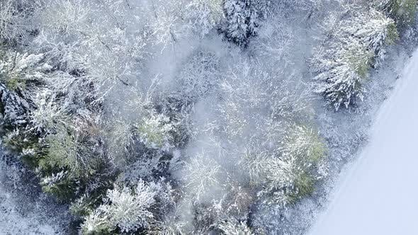 Cover Image for Snowy forest