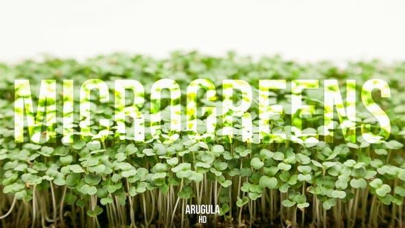 Thumbnail for Microgreens Arugula 2