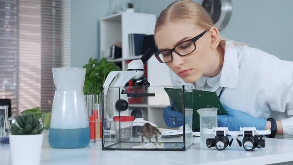 Thumbnail for Female Research Scientist Learning Animal Behavior During the Experiment