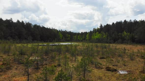 Countryside Lake With Young Trees By Forest