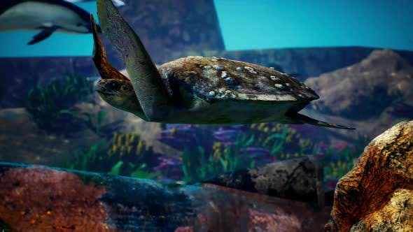 Thumbnail for Underwater Blue Ocean turtle 2