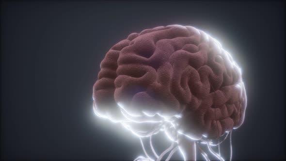 Thumbnail for Animated Model of Human Brain