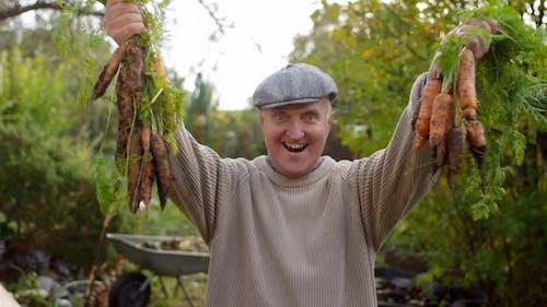 Jubilant männlich Gärtner zeigen aus Trauben von Homegrown Karotten