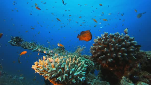 Cover Image for Underwater Sea Hard Coral