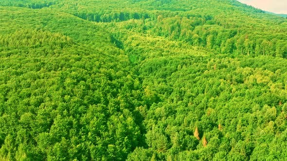 Aerial View on Tree Tops in Highland