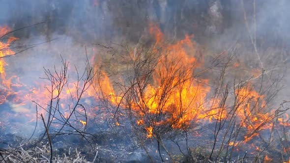 Thumbnail for Burning Dry Grass, Trees, Bushes, and Haystacks with Caustic Smoke. Fire in the Forest. Slow Motion