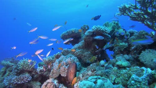 Underwater Fish Moray